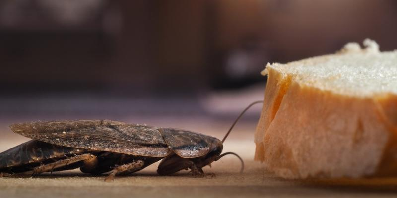 Why You Have Cockroaches | What To Do | Suburban Pest