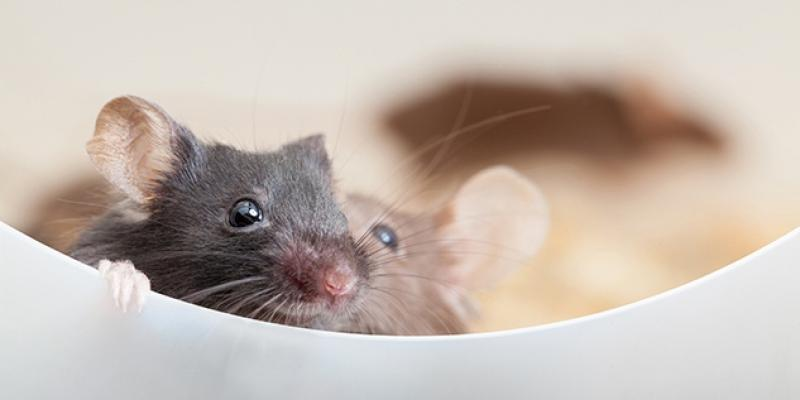 two mice sitting in a bowl