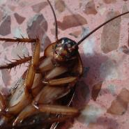 cockroach laying on its back