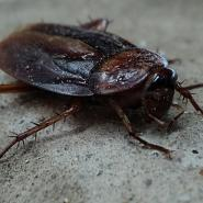 Cockroach on the ground